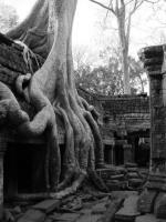 Cambodia – Ta Prohm